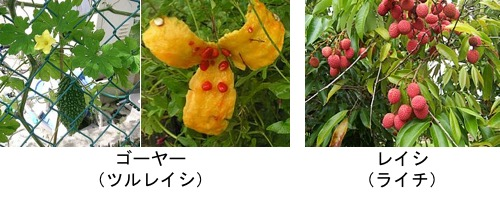 f:id:yachikusakusaki:20190622005908j:plain