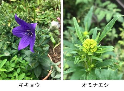 f:id:yachikusakusaki:20190624013909j:plain