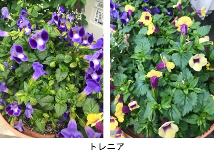 f:id:yachikusakusaki:20190624014024j:plain