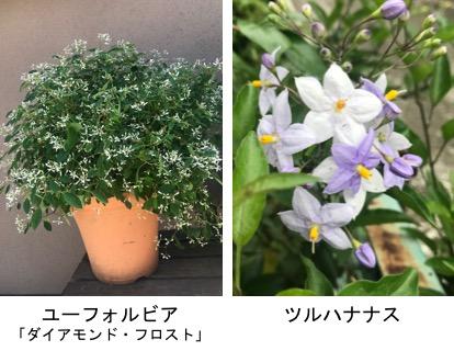 f:id:yachikusakusaki:20190624014123j:plain