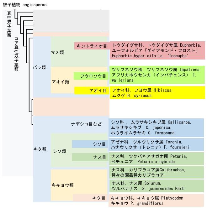 f:id:yachikusakusaki:20190624210925j:plain