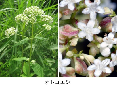 f:id:yachikusakusaki:20190705232117j:plain