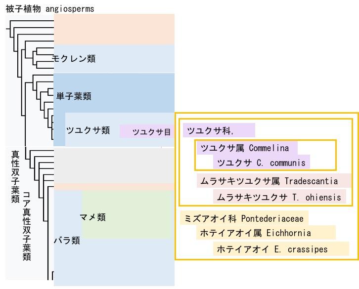 f:id:yachikusakusaki:20190708094121j:plain