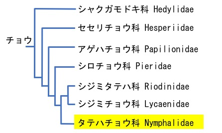 f:id:yachikusakusaki:20190708231152j:plain