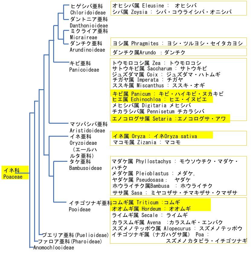 f:id:yachikusakusaki:20190711001800j:plain