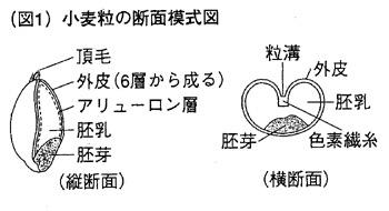 f:id:yachikusakusaki:20190711231659j:plain