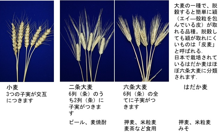 f:id:yachikusakusaki:20190711234245j:plain