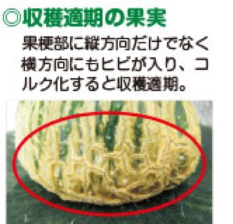 f:id:yachikusakusaki:20190715224217j:plain