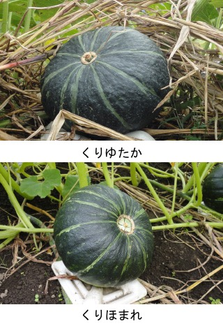 f:id:yachikusakusaki:20190715235528j:plain