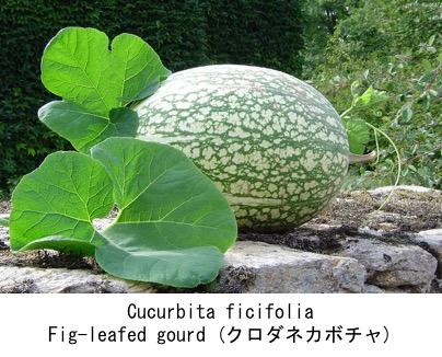 f:id:yachikusakusaki:20190719233405j:plain