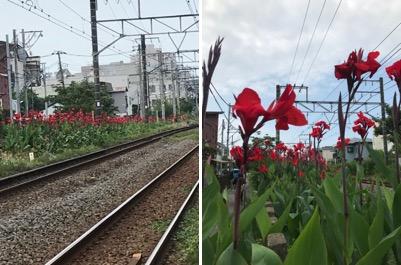 f:id:yachikusakusaki:20190724220756j:plain