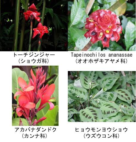 f:id:yachikusakusaki:20190724223824j:plain