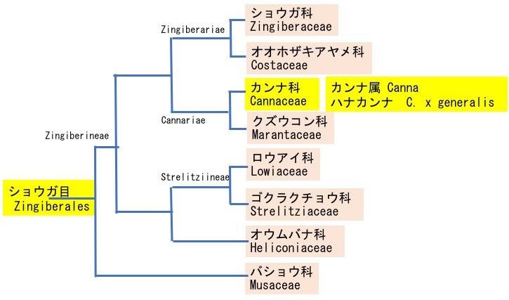 f:id:yachikusakusaki:20190724224404j:plain