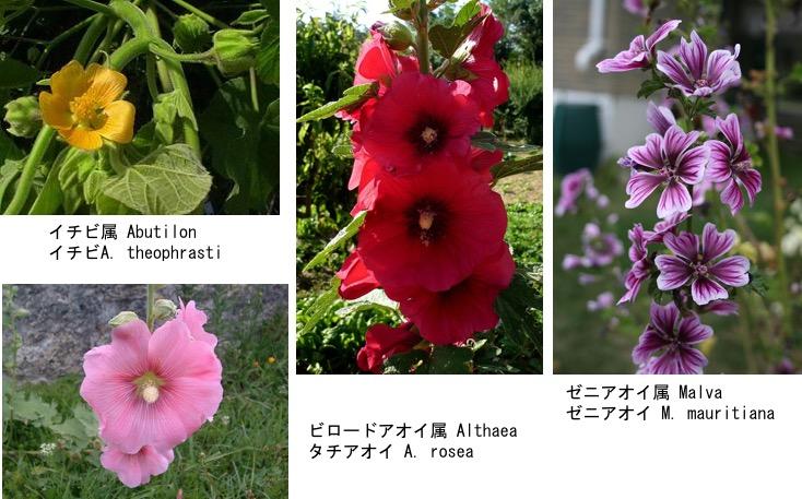 f:id:yachikusakusaki:20190813233420j:plain