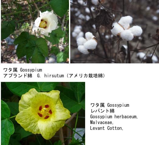 f:id:yachikusakusaki:20190813233439j:plain