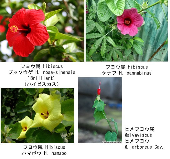 f:id:yachikusakusaki:20190813233510j:plain