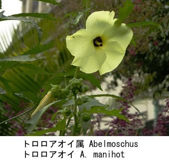 f:id:yachikusakusaki:20190814095319j:plain