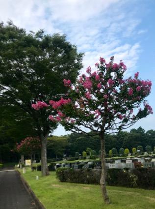 f:id:yachikusakusaki:20190819110703j:plain