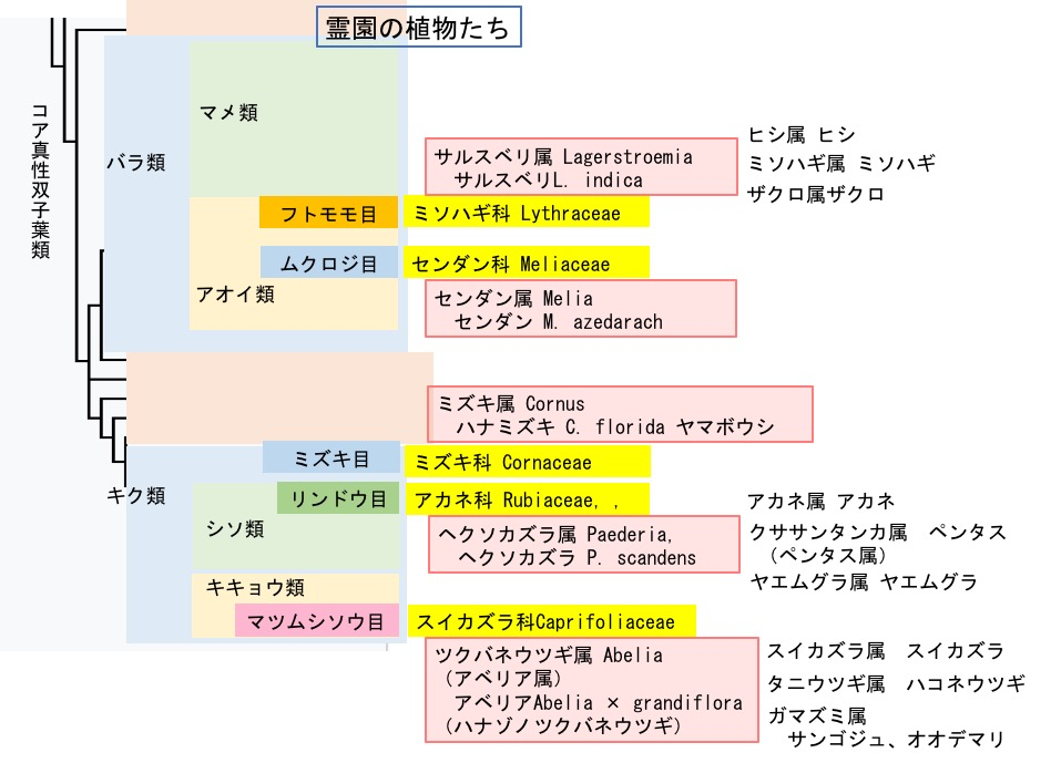 f:id:yachikusakusaki:20190819220931j:plain