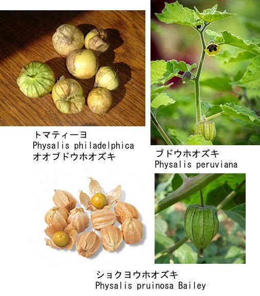 f:id:yachikusakusaki:20190822233626j:plain