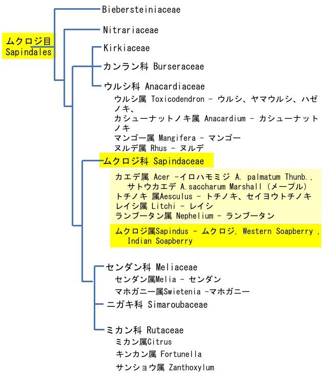 f:id:yachikusakusaki:20190901013155j:plain