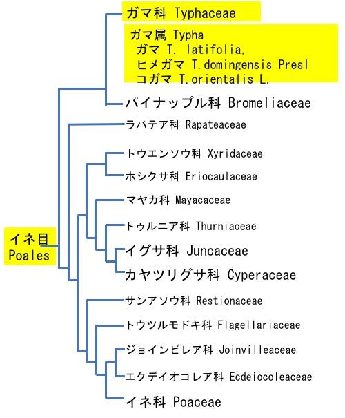 f:id:yachikusakusaki:20190902021104j:plain