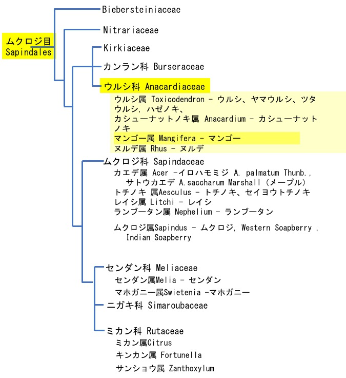 f:id:yachikusakusaki:20190905225613j:plain