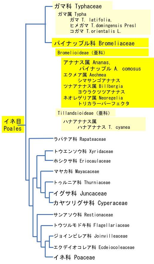 f:id:yachikusakusaki:20190906224718j:plain