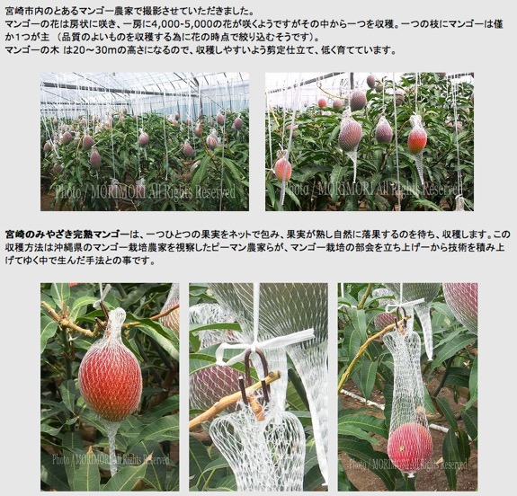 f:id:yachikusakusaki:20190908233328j:plain