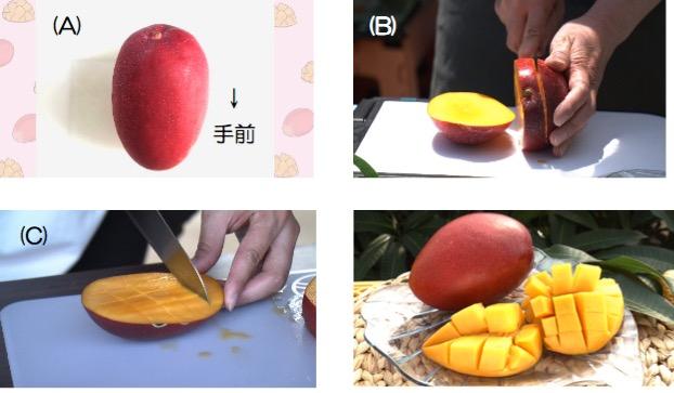 f:id:yachikusakusaki:20190908233851j:plain