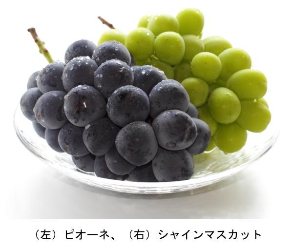 f:id:yachikusakusaki:20191017110851j:plain