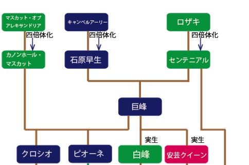 f:id:yachikusakusaki:20191017110948j:plain