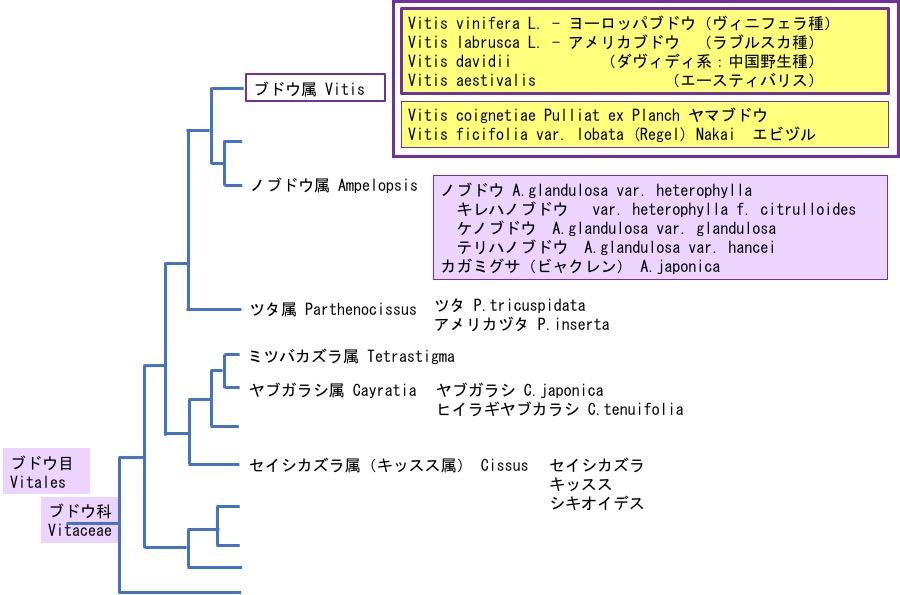 f:id:yachikusakusaki:20191020152443j:plain