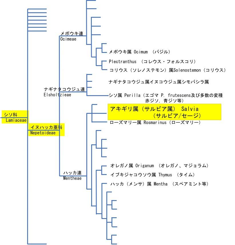f:id:yachikusakusaki:20191022230926j:plain