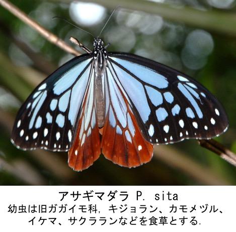 f:id:yachikusakusaki:20191107234628j:plain