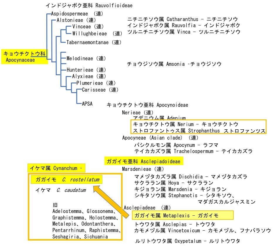 f:id:yachikusakusaki:20191108201138j:plain