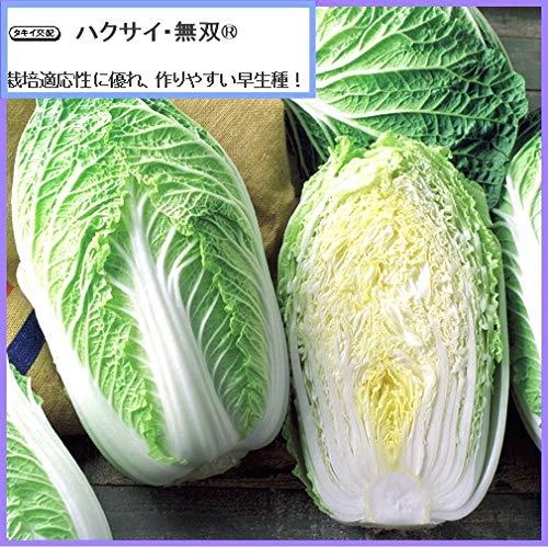 f:id:yachikusakusaki:20191114010524j:plain