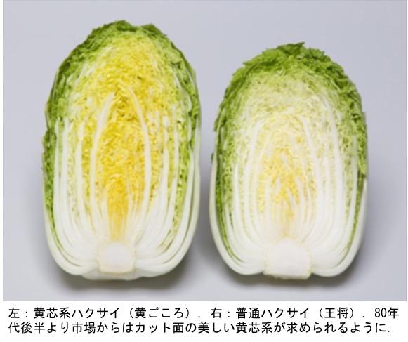 f:id:yachikusakusaki:20191114211043j:plain