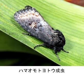f:id:yachikusakusaki:20191116160451j:plain