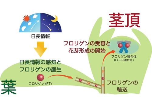 f:id:yachikusakusaki:20191116160753j:plain
