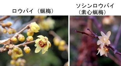 f:id:yachikusakusaki:20191201000519j:plain