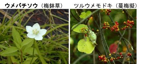 f:id:yachikusakusaki:20191201000607j:plain