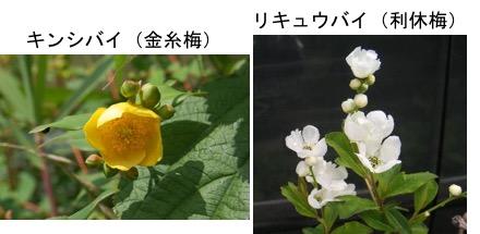 f:id:yachikusakusaki:20191201000617j:plain