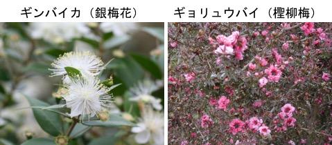 f:id:yachikusakusaki:20191201000629j:plain