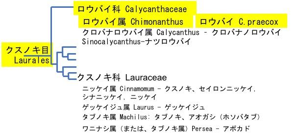 f:id:yachikusakusaki:20191201224915j:plain