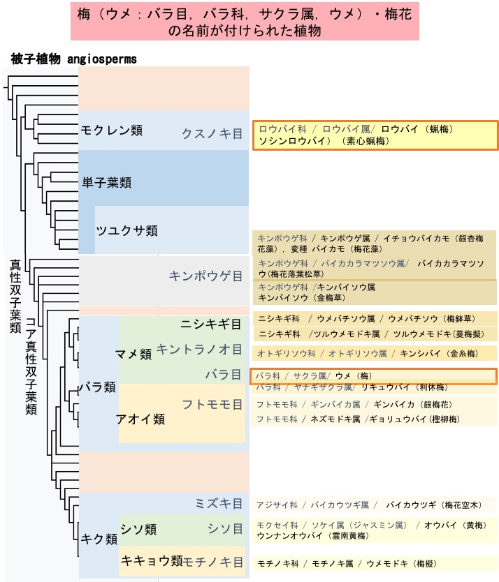 f:id:yachikusakusaki:20191201231203j:plain