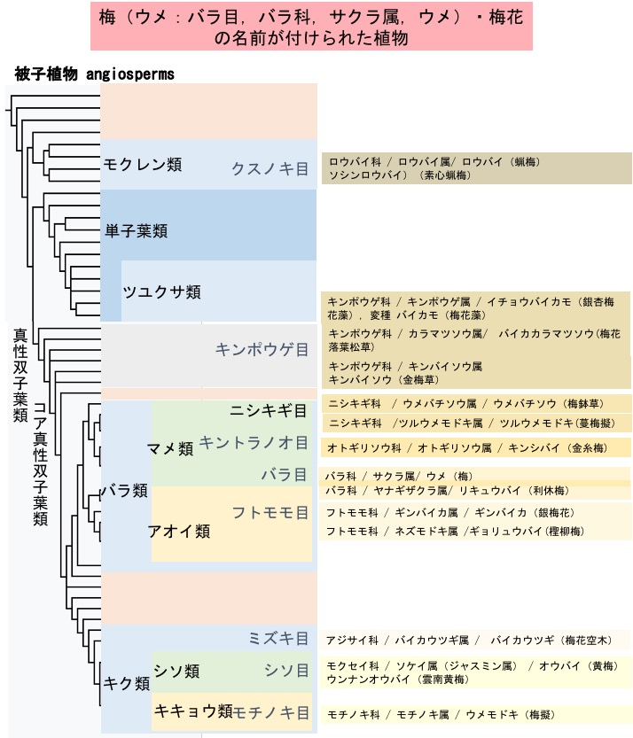 f:id:yachikusakusaki:20191203170342j:plain