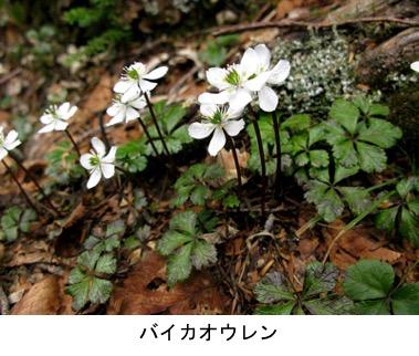 f:id:yachikusakusaki:20191204220339j:plain