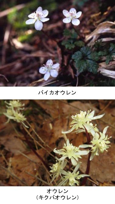 f:id:yachikusakusaki:20191204222150j:plain