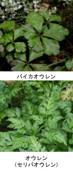 f:id:yachikusakusaki:20191204222538j:plain